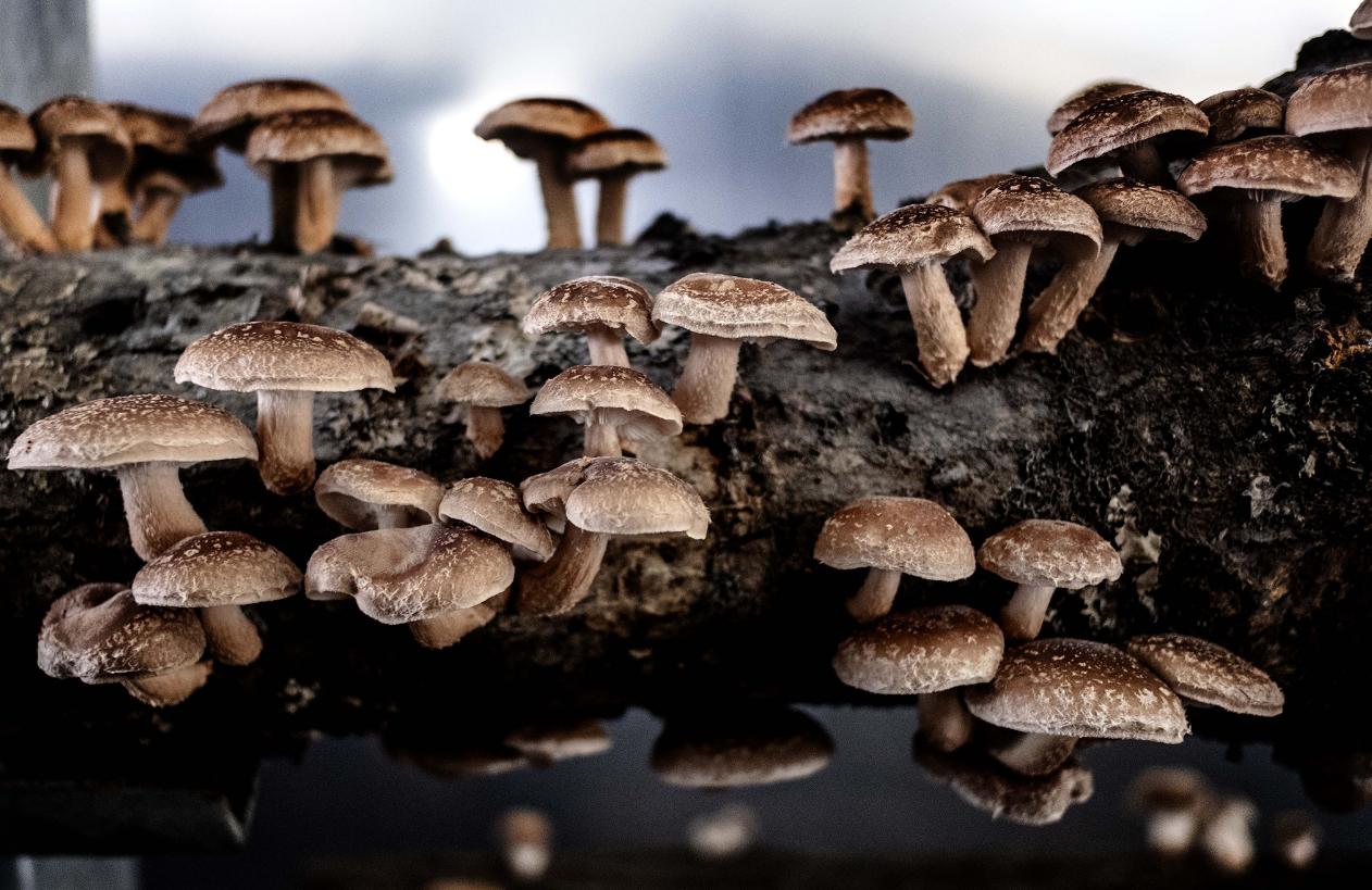cogumelos_pyublico